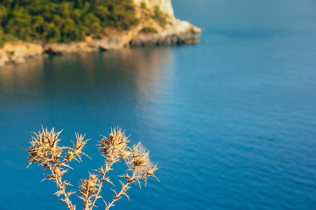 背景、カバクバレーのターコイズブルーの海と乾燥した花をとげ