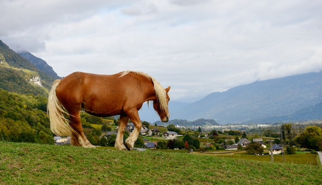 Чистокровная коричневая лошадь на лугу Premium Фотографии