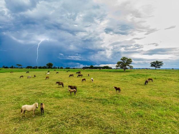 Чистокровные лошади, пасущиеся в пасмурный день в поле.