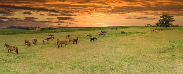 Чистокровные лошади, пасущиеся на закате в поле.