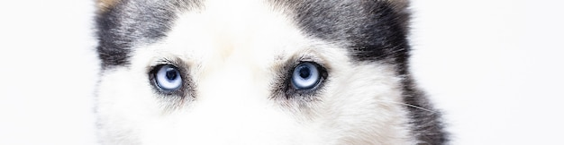 그 파란 눈앞에 ...