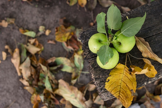 Three apples in water drops with autumn leaves on a wooden