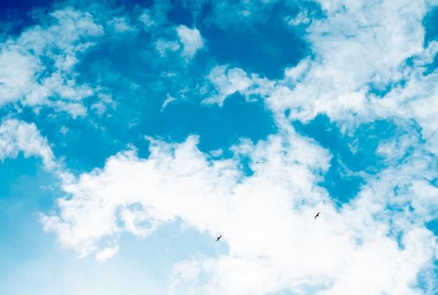 Three birds fly against the sky