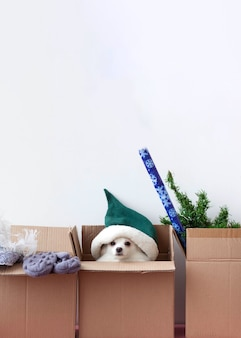 In three boxes there is a dog in an elf hat, mittens and an artificial christmas tree are lying