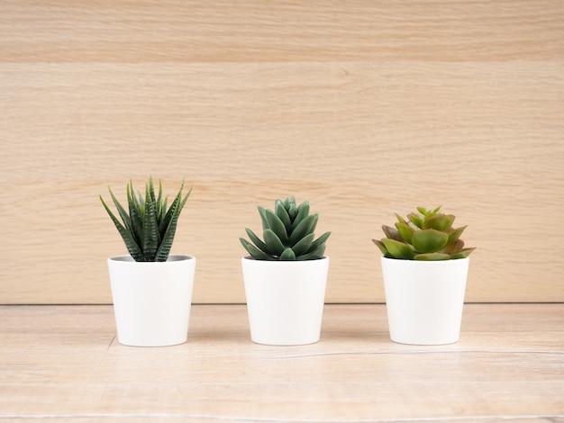 Три кактуса в белых горшках стоят на деревянных