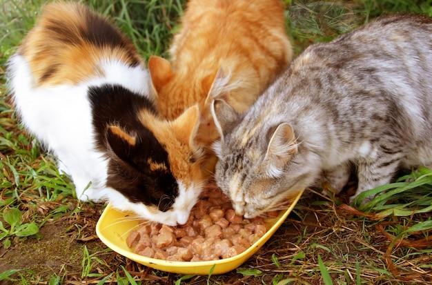Three cats having a breakfast