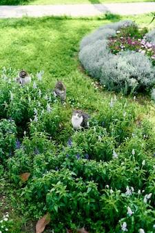 세 마리의 고양이는 야생화 중 녹색 잔디밭에 앉아