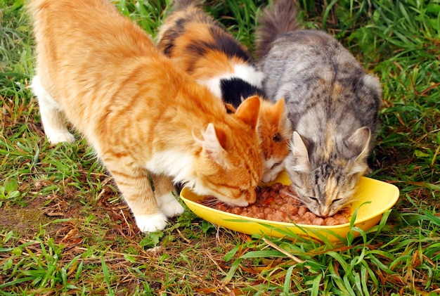 고양이 세 마리