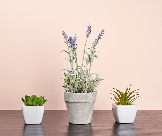 Three ceramic pots with plants on a black table