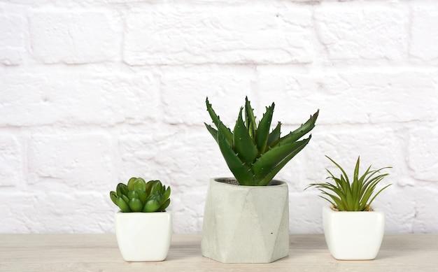 Три керамических горшка с растениями на сером столе на белом
