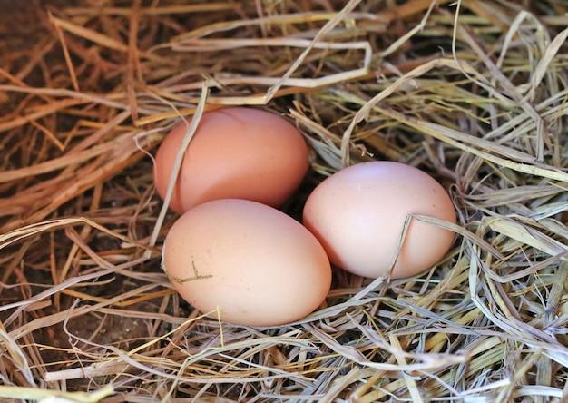 Three chicken eggs on hay