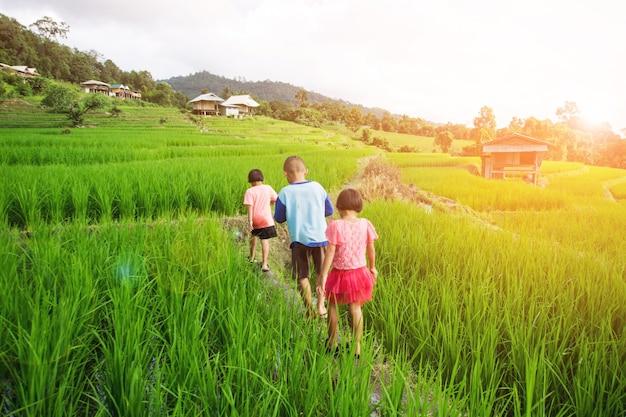 Three children walk on rice paddy at pa bong pieng, chaing mai, thailand.