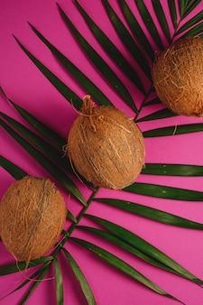 活気に満ちたピンクパープル無地背景、トロピカルコンセプト、トップビューでヤシの葉を持つ3つのココナッツフルーツ