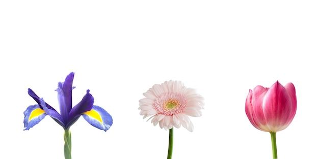 3つのカラフルな花青ピンク紫色白い背景を持つ美しい花