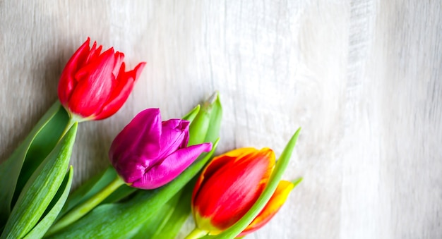 Three colorful tulips on wooden background. iinvitation postcard for mother's day or international women's day. minimalist bright flower for advert or promotion. spring flowers.