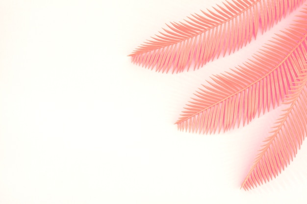 Three coral palm leaves on the corner of the white background