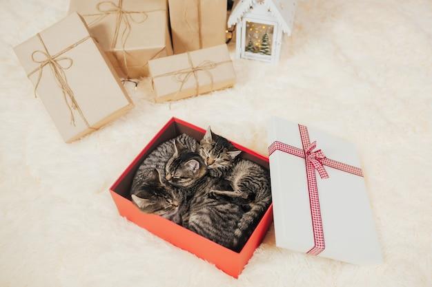 赤いギフトボックスで眠っている3匹のかわいい縞模様の子猫。