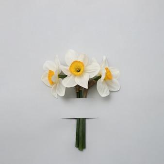 회색 배경에 종이 스트립 아래 세 수 선화. 기념일이나 휴일을 축하하는 봄과 엽서의 개념. 최소한의 현대적인 개념.