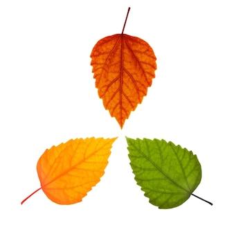 3つの異なる葉
