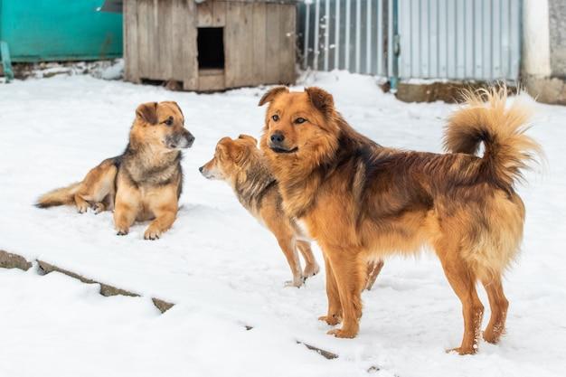 눈 속에서 겨울에 세 개입니다. 개는 친구다