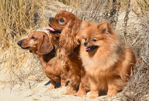 Three dogs in nature