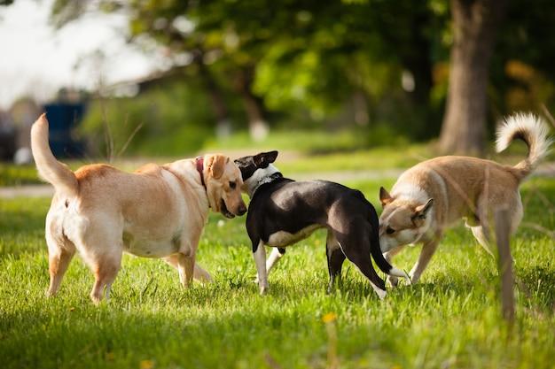公園の緑の芝生の上を歩く3匹の犬