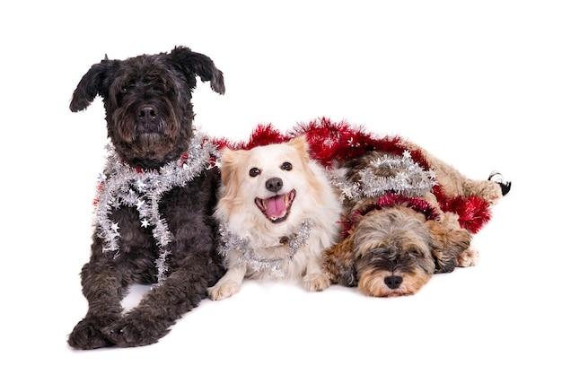 Три собаки с рождественскими гирляндами.