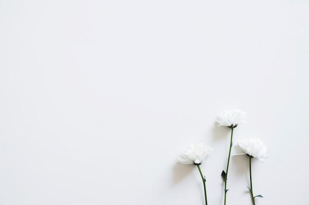 Tre fiori per la primavera