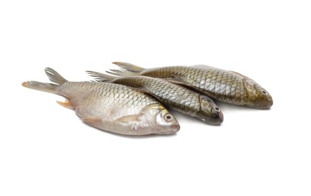 격리 된 흰색 배경에 연속으로 3 개의 신선한 원시 은색 미늘 물고기