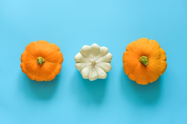 Three fresh yellow and white pattypan squash on blue background with copy space.