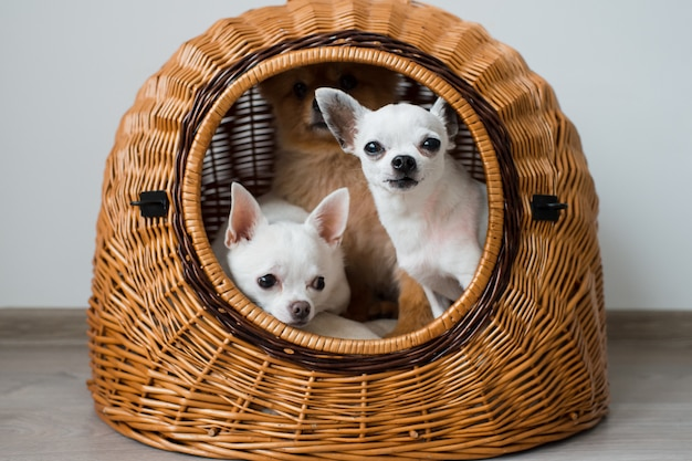 Three funny and cute puppies portrait.
