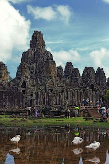 Three geese against the ancient building angkor wat. cambodia