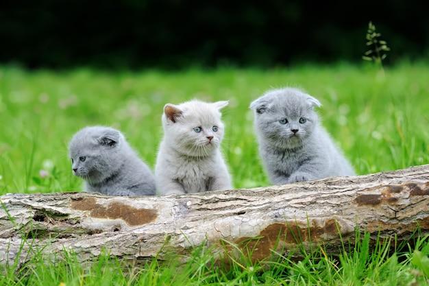 Three gray kitten on nature. cute baby kitten on tree