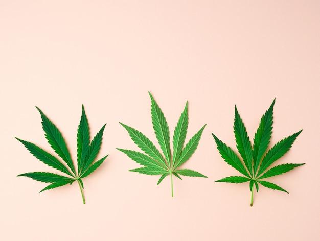 Three green leaves of hemp on a beige background