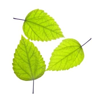 3つの緑の葉