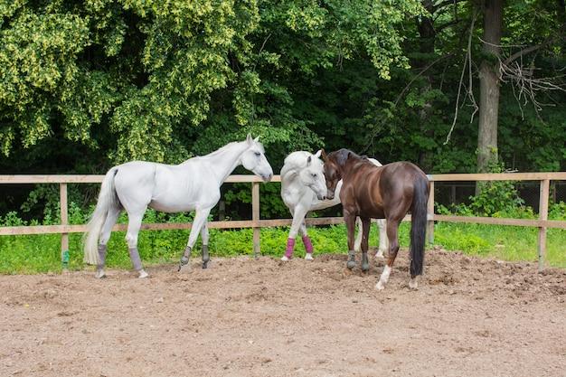 Три лошади пасутся и гуляют по загону в летний день