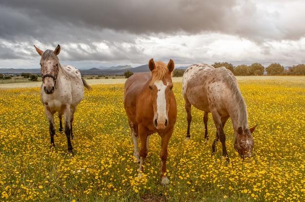 Three horses in a sunny day