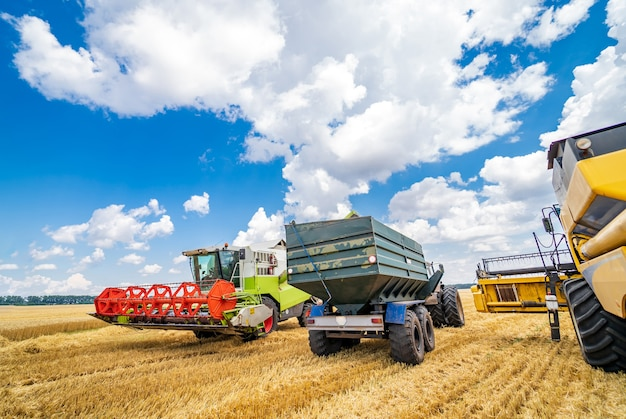Three items of wheat gathering machines. real process of wheat harvesting. blue cloudy sky above.