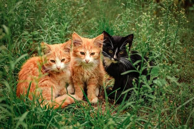 3匹の子猫が草の中に座っています。緑の芝生に生姜2匹と黒い子猫1匹が座っています。
