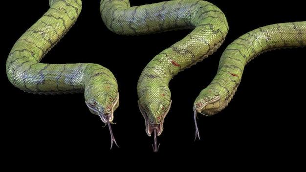3匹の大きくて歯の生えたヘビ。 3dレンダリング
