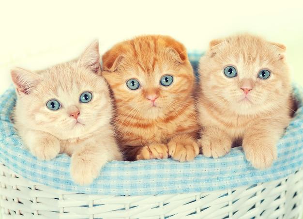 바구니에 세 개의 작은 새끼 고양이