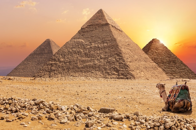 Three main pyramids of giza and a camel at sunset, egypt.