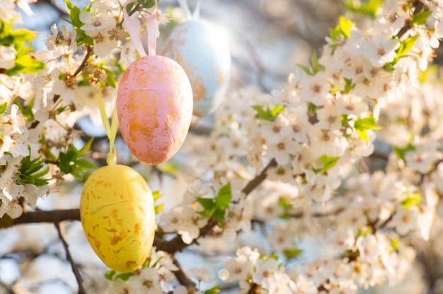 Три разноцветных пасхальных яйца висят на ветке цветущей сакуры в весеннем саду