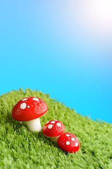 Three mushroom in the meadow after rain