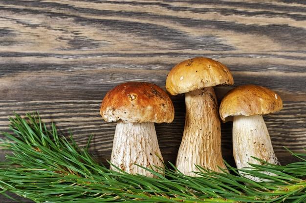 3つのキノコのポルチーニは、木製の背景に松の枝でクローズアップ。コピースペース。