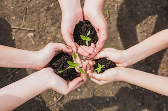 Three pairs of hands holding small plants