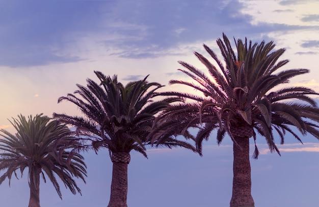 Три пальмы и красочное небо с красивым закатом