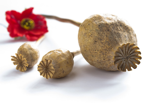 3つのpoppyheadsと赤い花