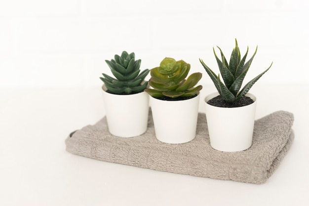 Three potted succulent plants stand on a cotton towel in a bathroom