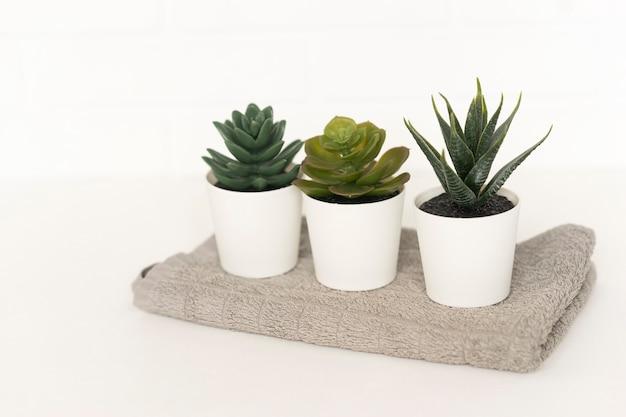 3つの鉢植えの多肉植物がバスルームの綿タオルの上に立っています
